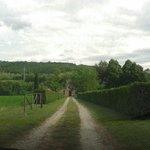 Viale del Ponticello