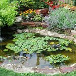 Tranquil Koi Pond from the Sun Porch
