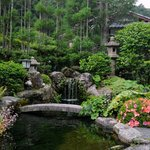 Serene japanese Garden, the view from the dining area