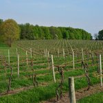 FENN VALLEY VINEYARDS, nearby...