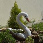 A swan in the garden