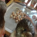 We got to see some baby chicks hatch!