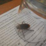 Cockroach in room