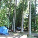 Tenting among Big Trees