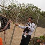 Feeding the ostrich