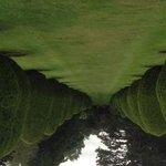 Topiary Avenue