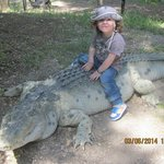 Heureusement le crocodile est faux mais tellement bien imité!