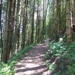 woods along river Seeache