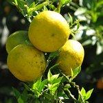 Früchte im Hotel Garten