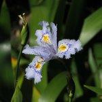 Pflanzen zum Entdecken