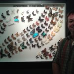 Butterfly display with some of the species they have