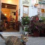 入口で飼い猫がお客さんを出迎えます