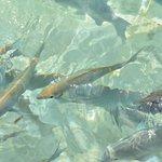 Вода настолько прозрачна, что рыбок можно наблюдать не прогружаясь