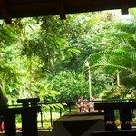 Zonas verdes , vistas desde Restaurant