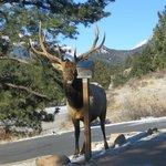 Elk at bird feeder