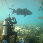 Giant Grouper - Looe Key Marine Sanctuary