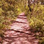 Trail- Shot 2