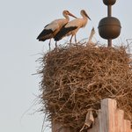 Storks on Mosque by TRW