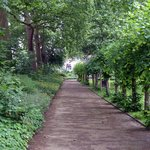 Tavistock Square - green paths