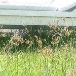 Weeds as high as sun lounge