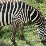 Photo of Explore East Africa Day Tours
