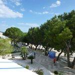 Pine Trees line the promenade