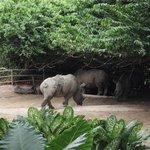 the big Rhinoceros