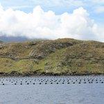 Killary mussels