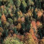 Bosques