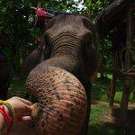 Feeding my elephant to say kop chai lai lai
