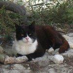 kitty at the beach!