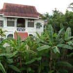 Lush tropical environment