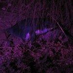 Close up under UV light.