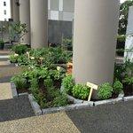 Herb garden (so cute)