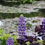 really beautiful flowers in garden