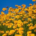 Fort Wool Flowers