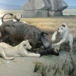 Africa display