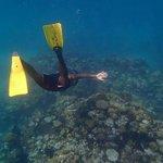 Caye chapel aquarium coral formations