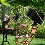 vue sur le jardin avec Léon le chat