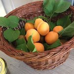 sweet apricots from the garden