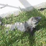 Gus our pet lizard