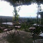 Het terras onder de druiven