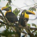 Observación de aves en Mindo