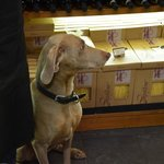 Truffle sniffing dog at Conti in Mercato Centrale