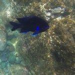 one of many beautiful fish