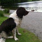 Great doggy walks around Grasmere Lake
