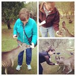 Whole family in on the Kangaroo action
