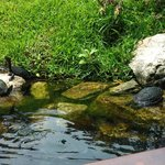 Turtles on Jesus's Romantic Boat Ride