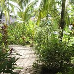 Our beautiful Bocas Inn Garden, invites you to relax!