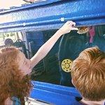Viewing sea turtles